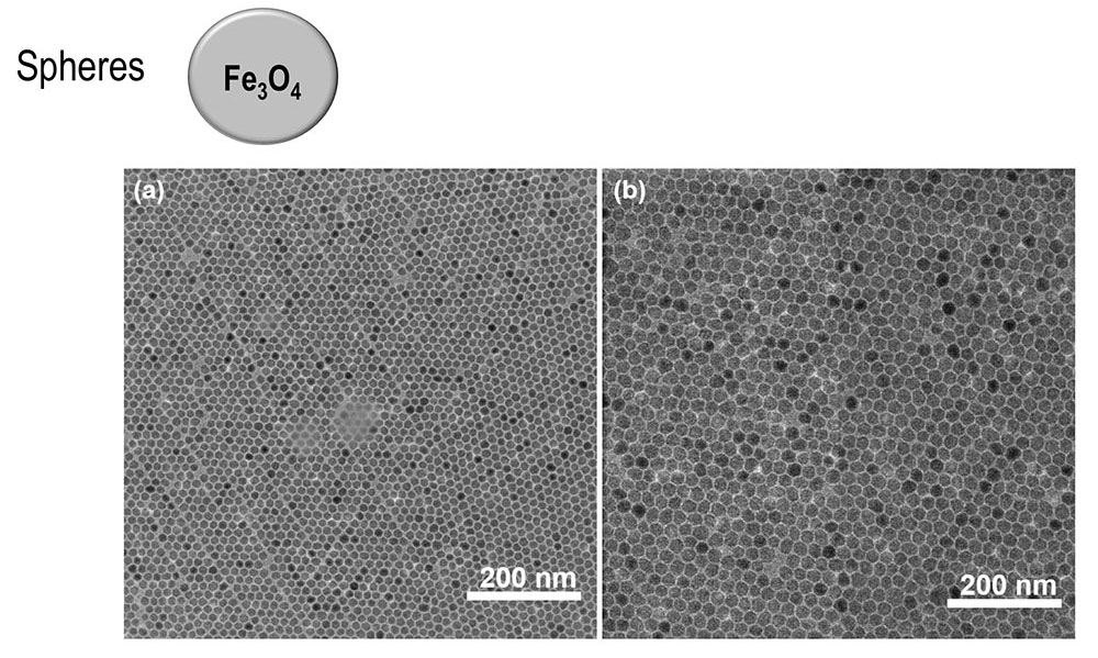 TEM images for sphere Fe3O4 NPs with a mean size of (a) 12 and (b) 17 nm