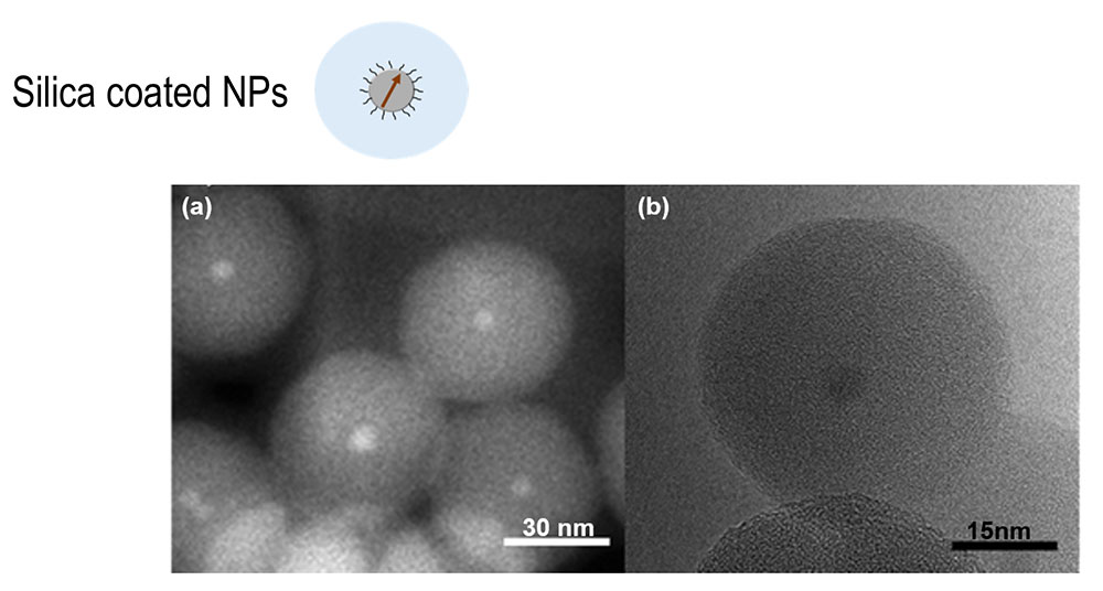 TEM images for Fe3-XO4@SiO2 NPs