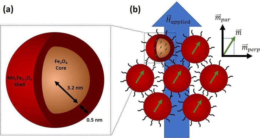 Spin canting across core/shell Fe3O4/MnxFe3−xO4 nanoparticles
